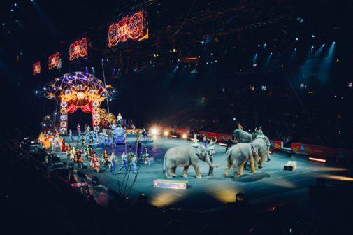 Dánská vláda odkoupí poslední čtyři slony z místních cirkusů