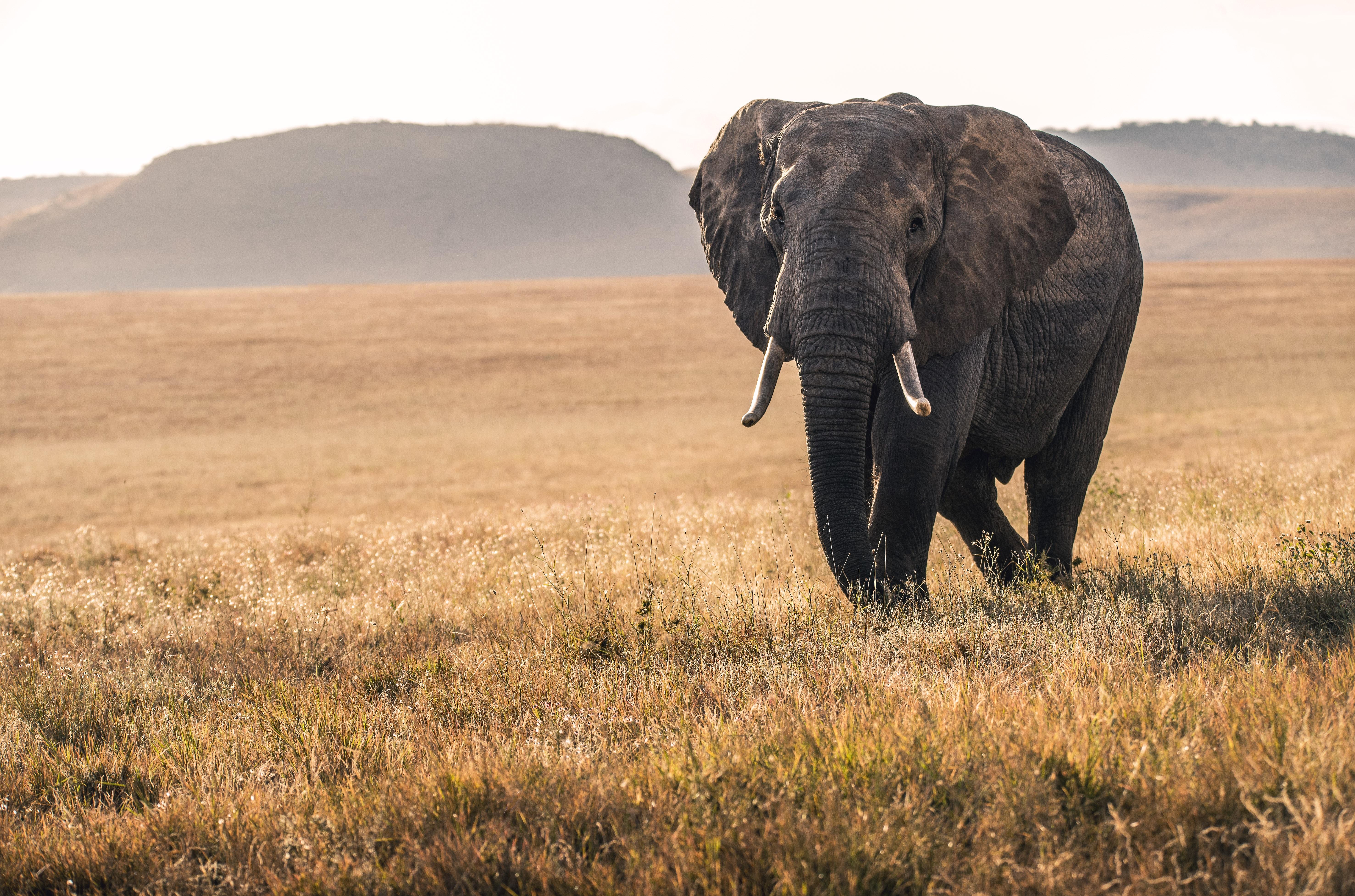 Obchodování s ohroženými druhy zvířat a rostlin bude podléhat přísnější pravidlům
