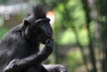 Chovatelé i návštěvníci děčínské zoo se radují z narození malého makaka