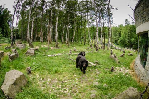 Soutěž Šípkový podzim ostravské zoo pobízí ke sběru lesních plodů pro zvířata