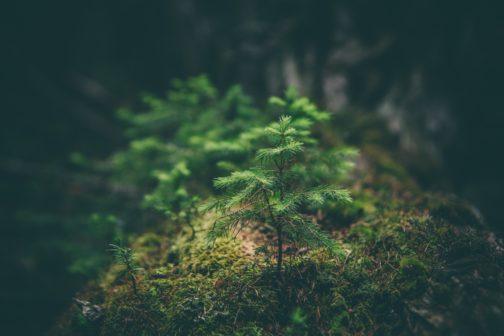 Den za obnovu lesa. Veřejnost pomůže přírodě po celém Česku