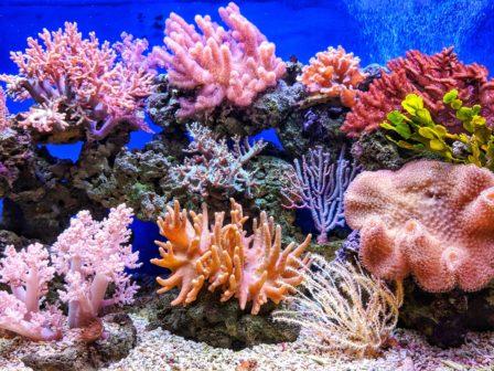 Zázrak na dně moří. Zdánlivě mrtví koráli znovu vykazují známky života