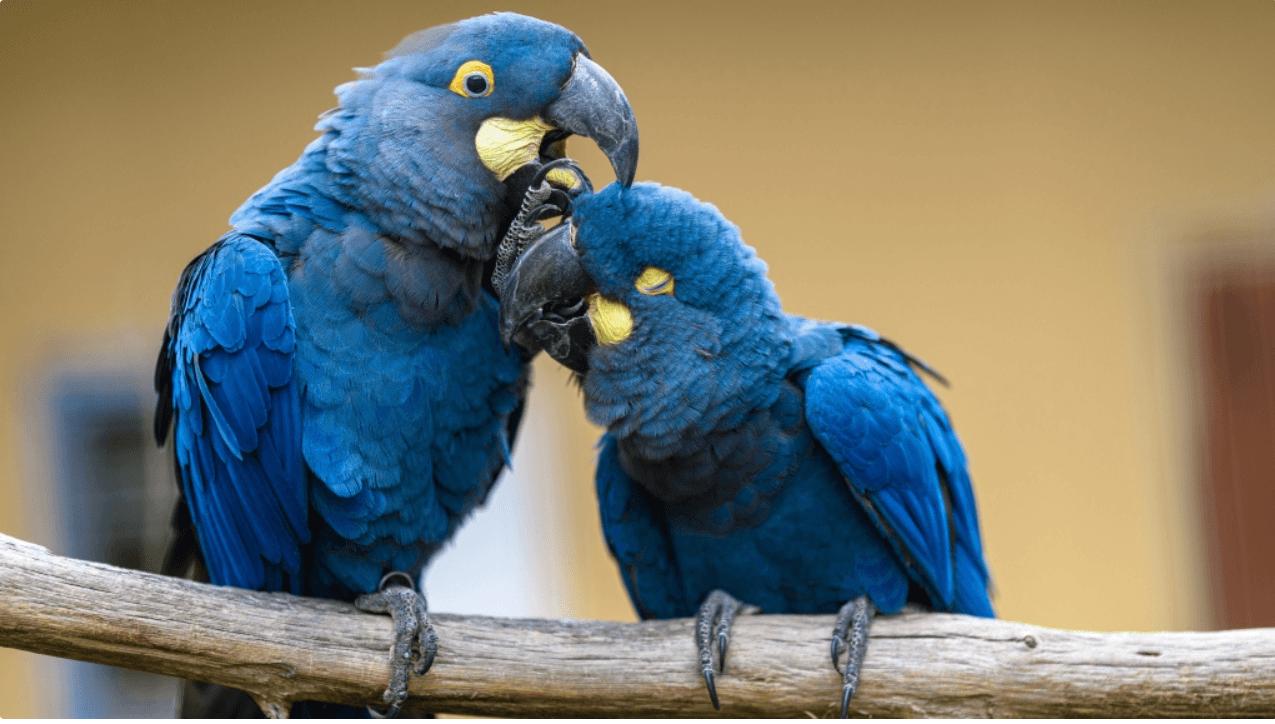 Zoo Praha otevřela nový pavilon papoušků. Dokonale imituje jejich přirozené prostředí