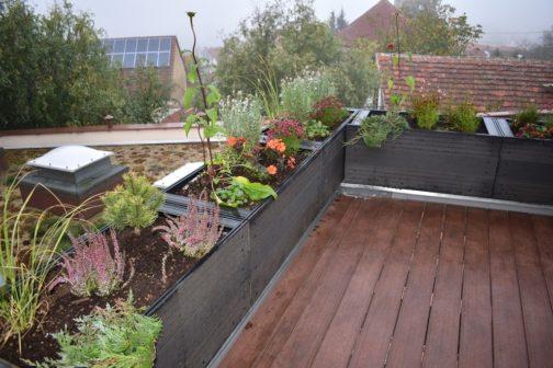 Na první ze základních škol v Plzni vyrostla zelená střecha
