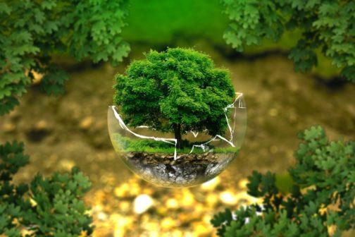 Výsadba stromů v Poodří zachrání ohroženého brouka páchníka