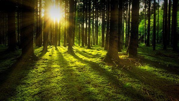 Pardubice pomohou zmírnit dopady klimatické změny. Vysadí nové stromy