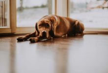 Nálepka na dveřích usnadní vstup lidem s vodicím či asistenčním psem