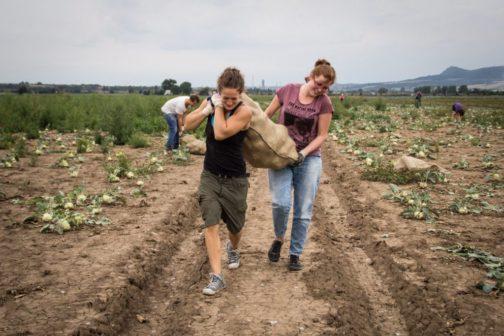 Zachraň jídlo letos díky paběrkování zachránilo 20,5 tun jídla