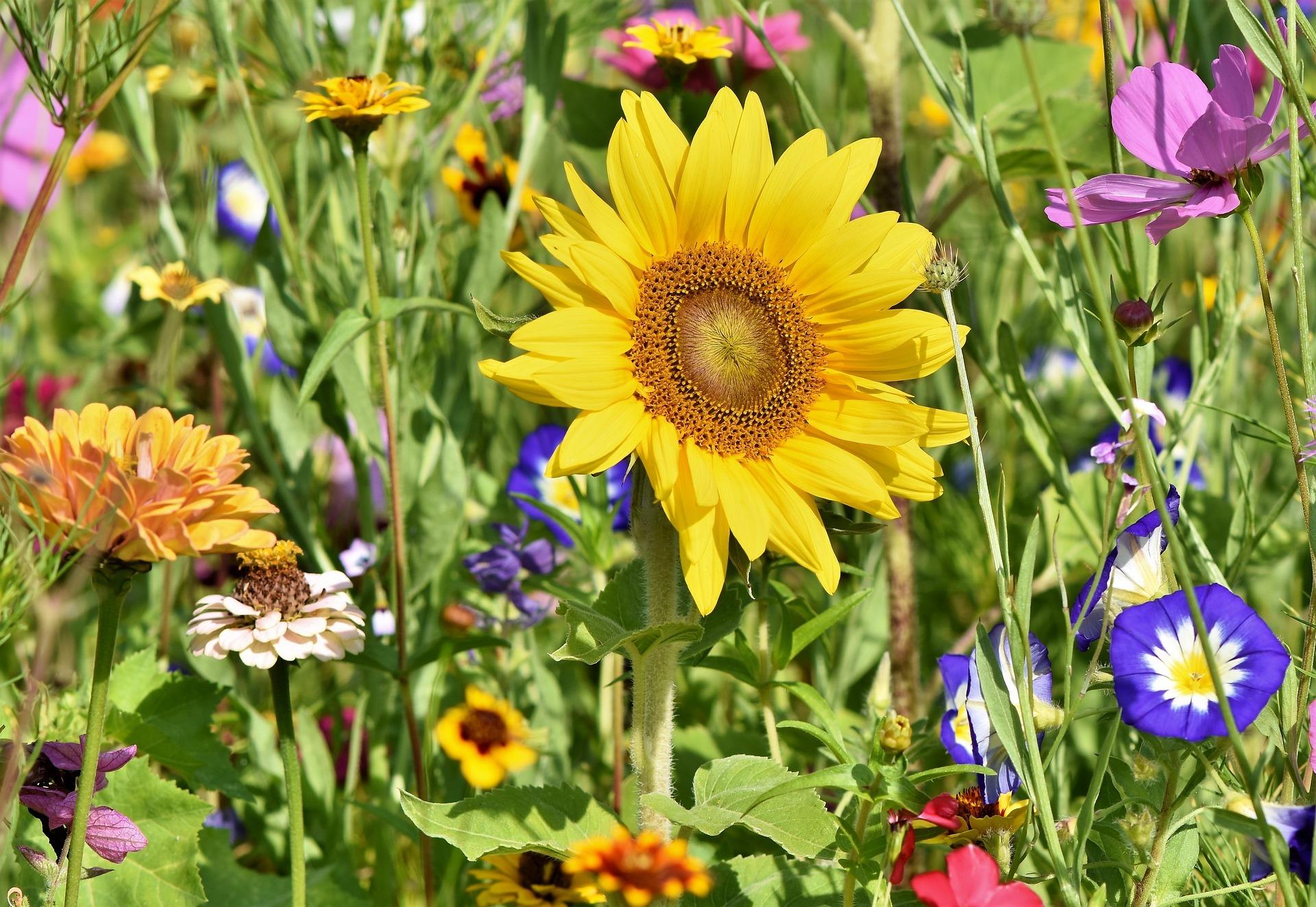 Květinové záhony zkrášlily zanedbané travnaté plochy v Ostravě