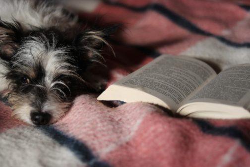 Děti se  v přítomnosti psa zlepšují ve čtení, ukazuje studie