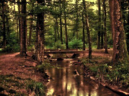 Obec Vendolí osázela 50 hektarů polí dřevinami, keři a ovocnými stromy