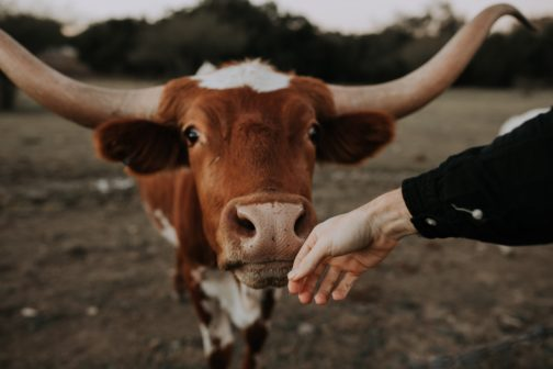 Vztah lidstva ke zvířatům prochází revolucí, potvrzuje to i nový vědecký obor